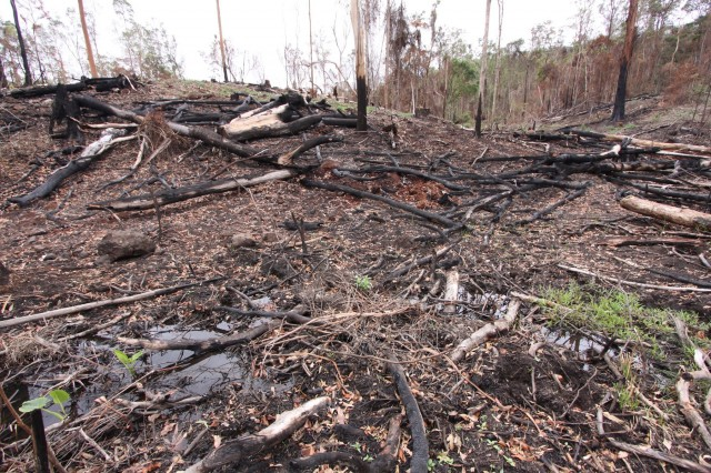 Yabbra State Forest. Logging of wetland in dieback area, 2009.